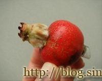 炒紅果的做法圖解8