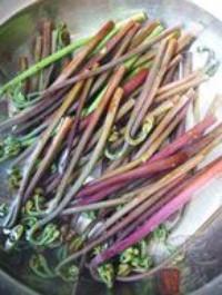 蒜泥拌蕨菜的做法圖解4