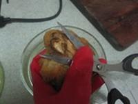 猴頭菇燉排骨的做法圖解4