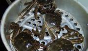 清蒸大閘蟹的做法圖解2